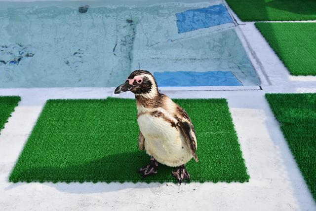 うみたま体験パーク つくみイルカ島 ペンギン