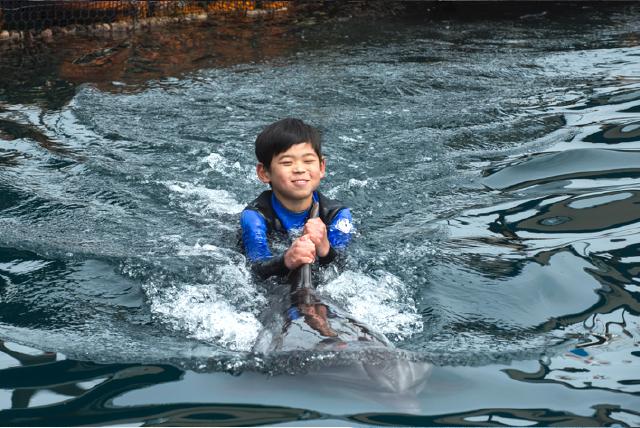 うみたま体験パーク つくみイルカ島 イルカと泳ごう!