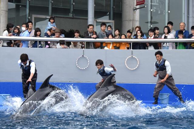 うみたまご イルカのパフォーマンス