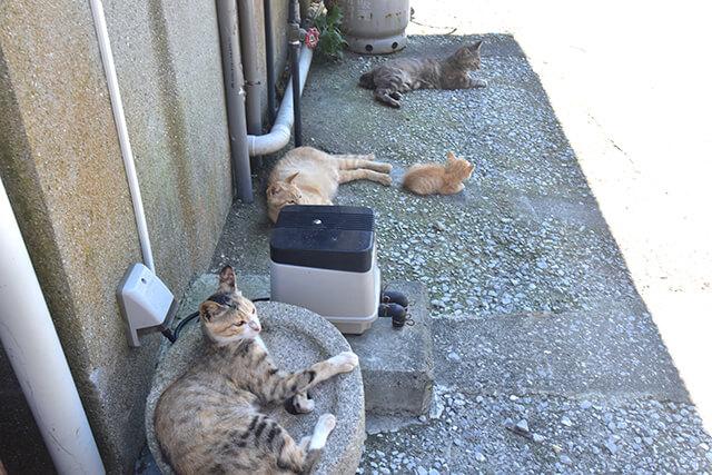 猫 深島 大分