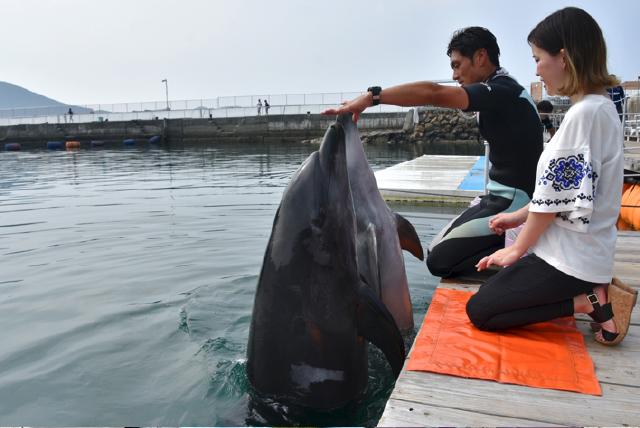 うみたま体験パーク つくみイルカ島 イルカとあそぼ!Lite