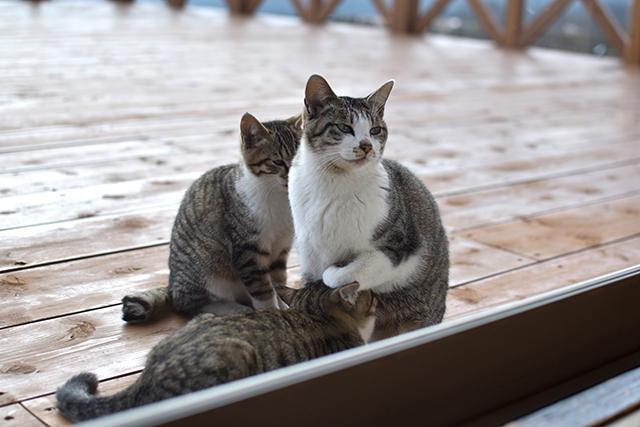TAOの里の猫ちゃん
