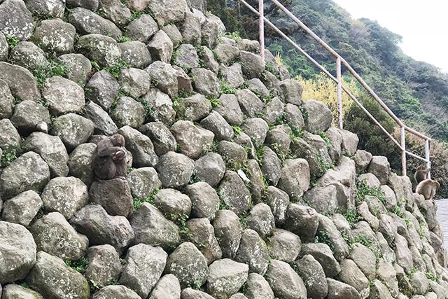 高崎山 猿