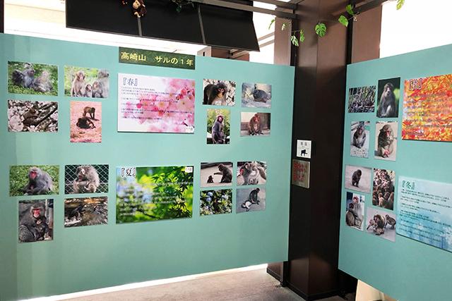 MONKEY MUSEUM おサル資料室