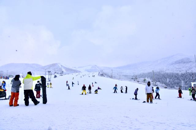九重森林公園スキー場 ゲレンデ