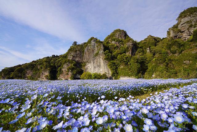 『青の洞門』 ネモフィラ畑