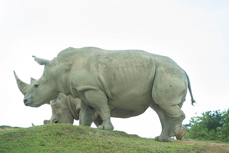 九州自然動物公園 アフリカンサファリ