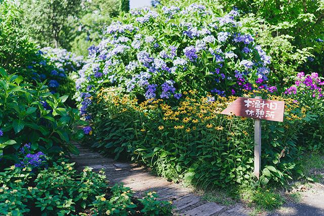 竹田市 くじゅう花公園