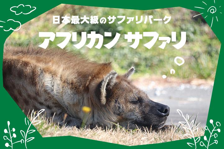 猛獣たちが目の前に! <br>日本最大級のサファリパーク